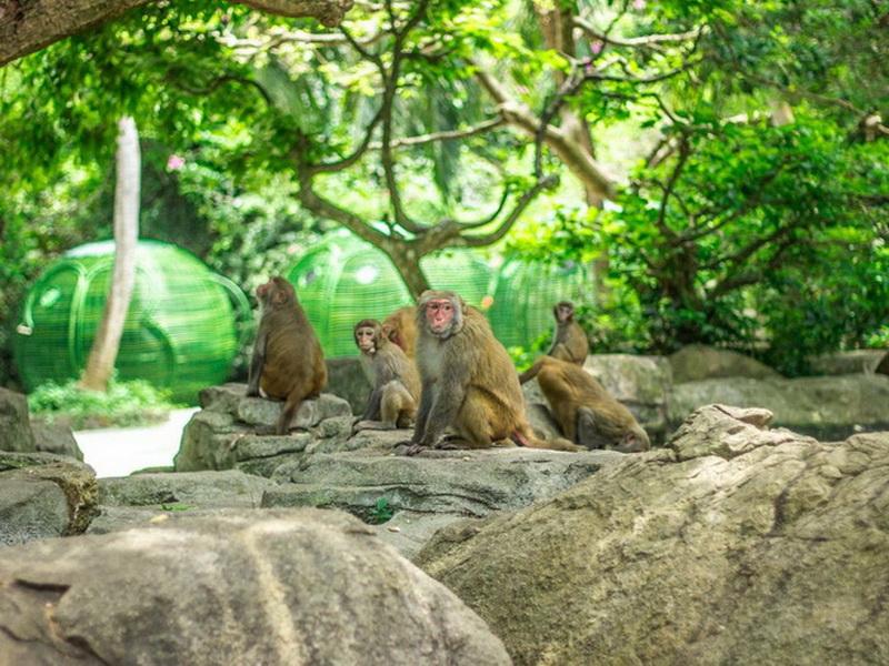 В Хайнань «дикарем»: чем заняться, что посмотреть