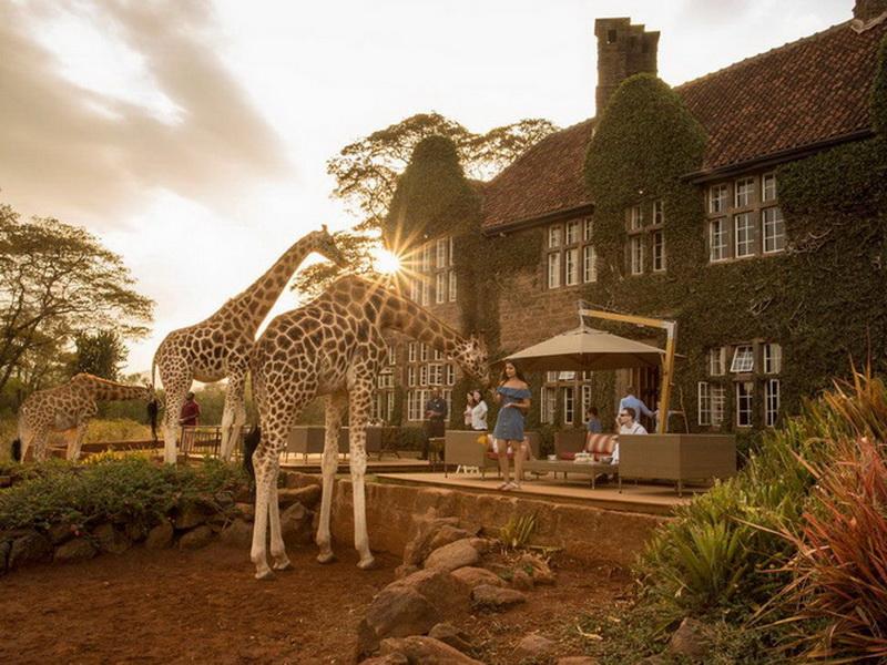 Как покормить жирафа из окна или переночевать среди гор: топ-7 самых необычных отелей в мире