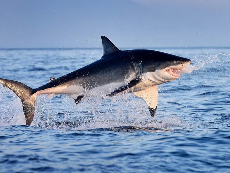 Топ-5 самых опасных животных Австралии