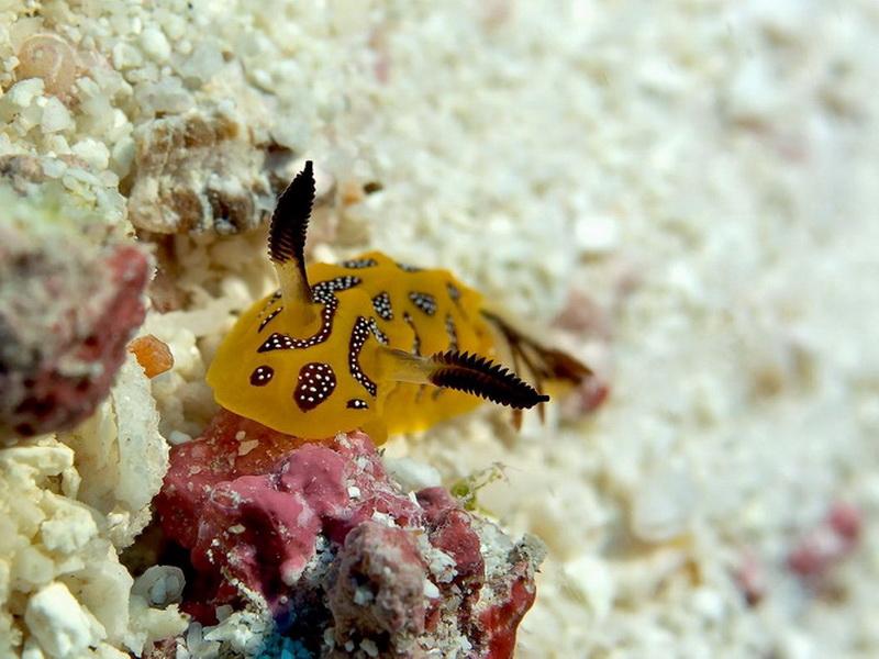 Находка для дайверов: самые лучшие коралловые рифы