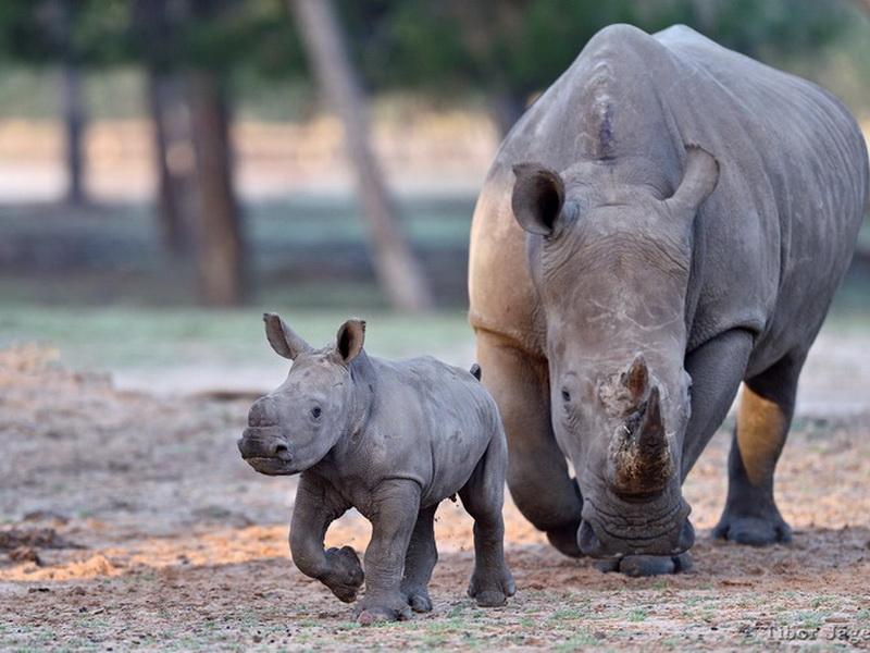 Лучшие зоопарки мира: топ-12 мест, куда следует отправиться