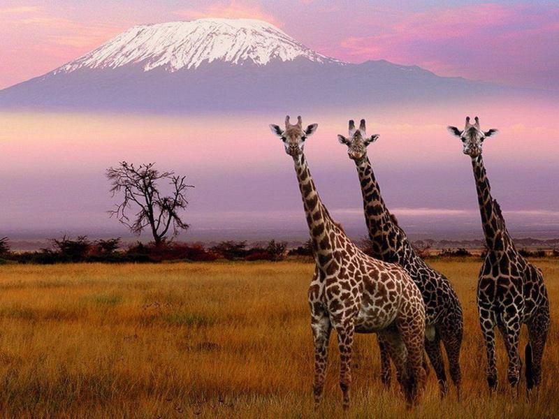 Нетронутые места планеты: топ-8 стран для зеленого туризма
