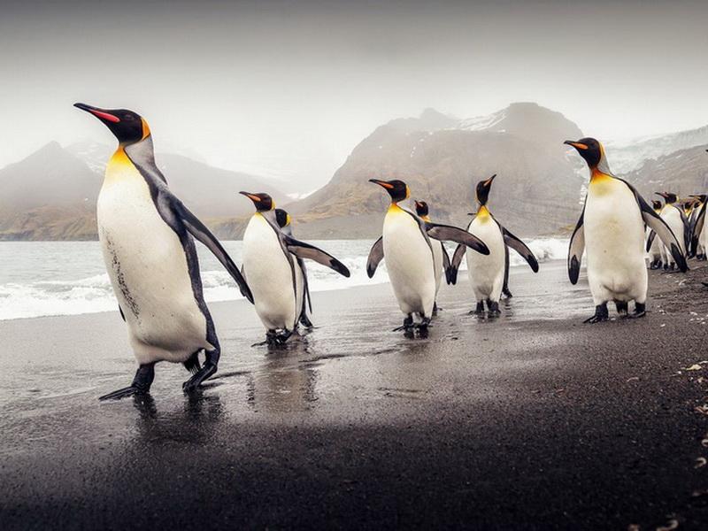 Зона пернатых: 7 природных заповедников, где можно понаблюдать за пингвинами