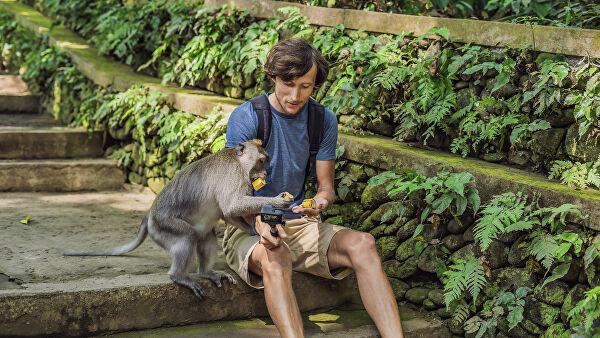 ВТаиланде обезьяна искусала российского туриста