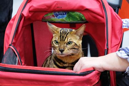 ВРоссии неупростят правила перевозки животных